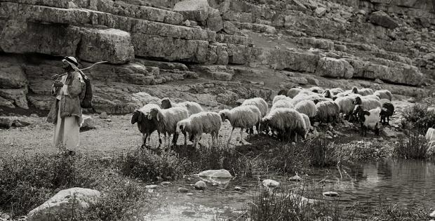 O pastor e as ovelhas - o cuidado do sacerdote
