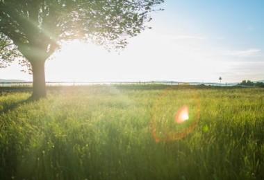 Árvore no campo