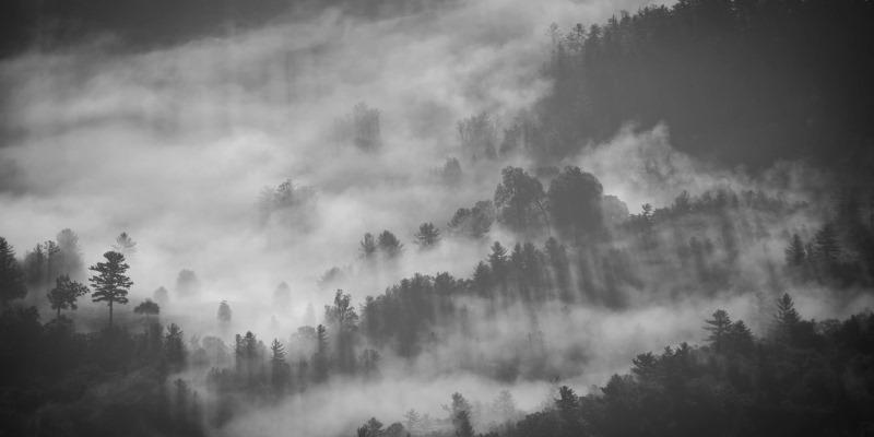 Natureza, floresta