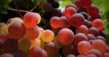 Frutos - Uva