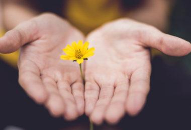 Pessoa com uma flor amarela nas mãos, representando os Versículos sobre perdoar as pessoas