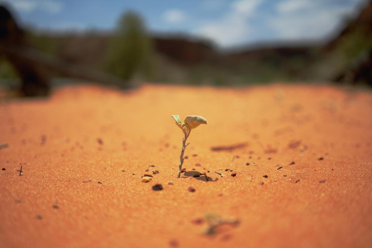 Planta nascendo no solo árido, representando os versículos para encontrar ânimo espiritual