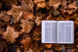 bíblia sobre folhas